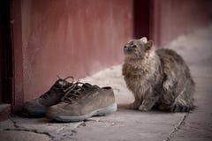 2猫 库存图片