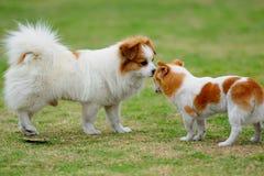 собаки 2 Стоковое фото RF