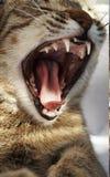 2猫 免版税图库摄影