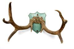 2 antlers белого Стоковые Изображения RF