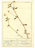 2 ark för 30 herbarium Arkivfoto