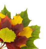 2 autumn colors Arkivfoto