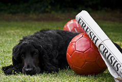 2 balones de fútbol con el título y el perro guardián de periódico Imagen de archivo libre de regalías