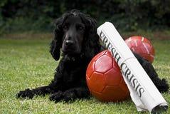 2 balones de fútbol con el título y el perro guardián de periódico Imágenes de archivo libres de regalías
