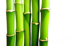 2 bamboo свежей Стоковая Фотография RF