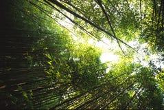 2 bambus Zdjęcie Royalty Free