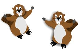 2 Beaver cartoons Stock Images