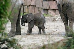 2 behandla som ett barn elefanten arkivbild