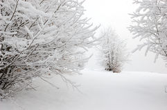 2 bergsnowtrees Fotografering för Bildbyråer