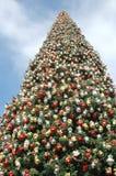 2 big christmas tree Στοκ εικόνα με δικαίωμα ελεύθερης χρήσης
