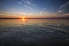 2 Birds Flying Near Body of Water during Orange Sunset Royalty Free Stock Image