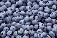 2 blåbär Arkivfoto
