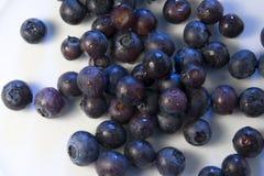 2 blåbär arkivfoton