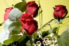 2 blommor Arkivbilder