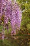 2 blommor fuji Arkivfoto