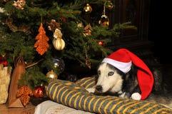 2 bożych narodzeń pies Obrazy Royalty Free