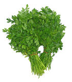 2 bunches of parsley Stock Image