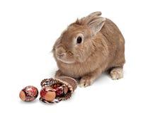 2 bunny Πάσχα Στοκ Εικόνες
