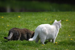 2 cats on leer. 2 two cats on leer, we see birds Stock Photos