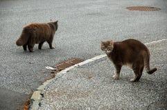 2 chats bruns pelucheux mous Image libre de droits