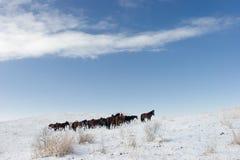 2 chevaux de troupeau Photos libres de droits