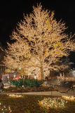 2 christmas cottonwood lights tree Στοκ Εικόνες
