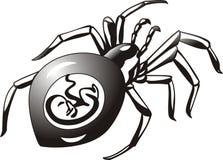 2 ciężarny pająk Zdjęcie Stock