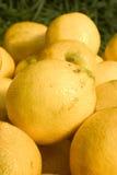 2 citroner Fotografering för Bildbyråer