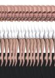 2 clonati Fotografia Stock Libera da Diritti