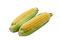 2 cob corn isolated. On white background stock image