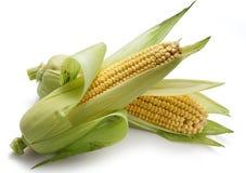 2 corncobs Стоковая Фотография RF