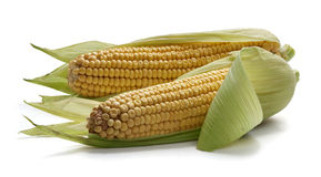 2 corncobs Стоковые Фотографии RF