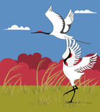 2 Cranes in spring. Beautiful cranes in spring royalty free illustration