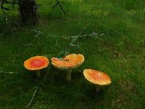 2 czarodziejek halizny bajki drewno Zdjęcie Stock
