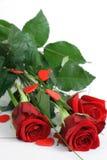 2 czerwona róża Zdjęcie Stock