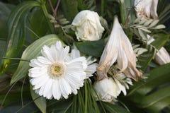 2 döda blommor arkivfoto