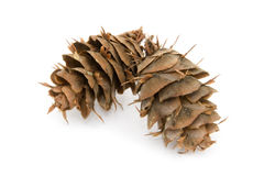 2 Douglas Fir Cones Royalty Free Stock Images
