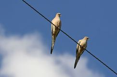 2 Doves on Line. 2 Doves on a ppower line stock photos