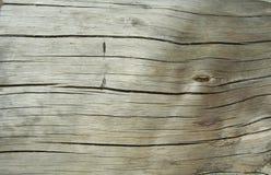 2 drewna obrazy royalty free