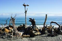 2 driftwood zdjęcie stock