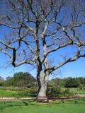 2 drzewo Zdjęcie Royalty Free