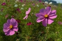 2 dziki kwiat Obrazy Stock
