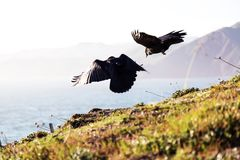 2 Eagle Near Green Grass and Cliff during Daytime Royalty Free Stock Photography