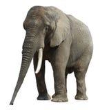 2 elefant Photo stock