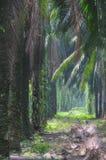 2 estate oil palm series Στοκ Φωτογραφία