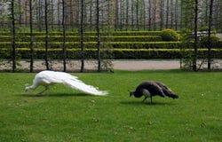 2 exotische vogels in park Stock Foto's