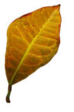 2 fallen leafyellow Royaltyfria Bilder