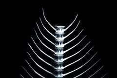 2 fishbone σειρές Στοκ Εικόνες