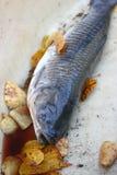2 fiskscales Royaltyfri Bild