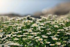 2 fleurs blanches Photographie stock libre de droits